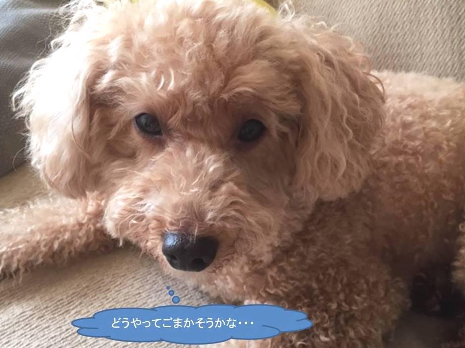 f:id:nanachan59:20190704165543j:plain