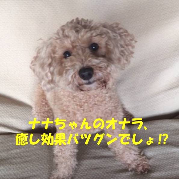 f:id:nanachan59:20190704170616j:plain