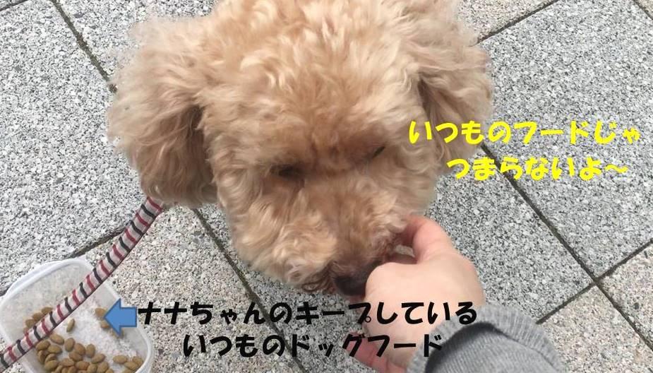 f:id:nanachan59:20190711223946j:plain