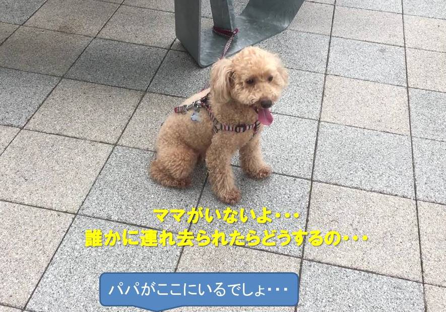 f:id:nanachan59:20190728161611j:plain