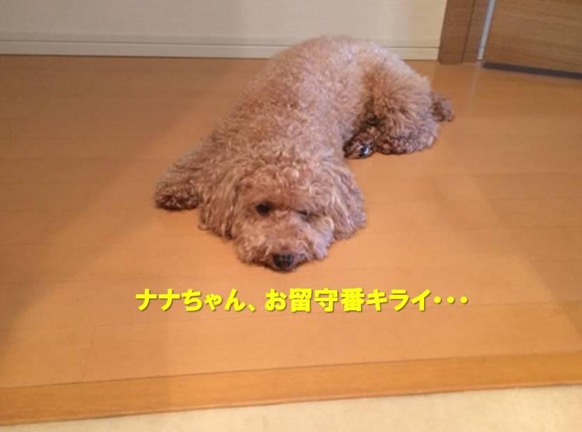 f:id:nanachan59:20190728163135j:plain