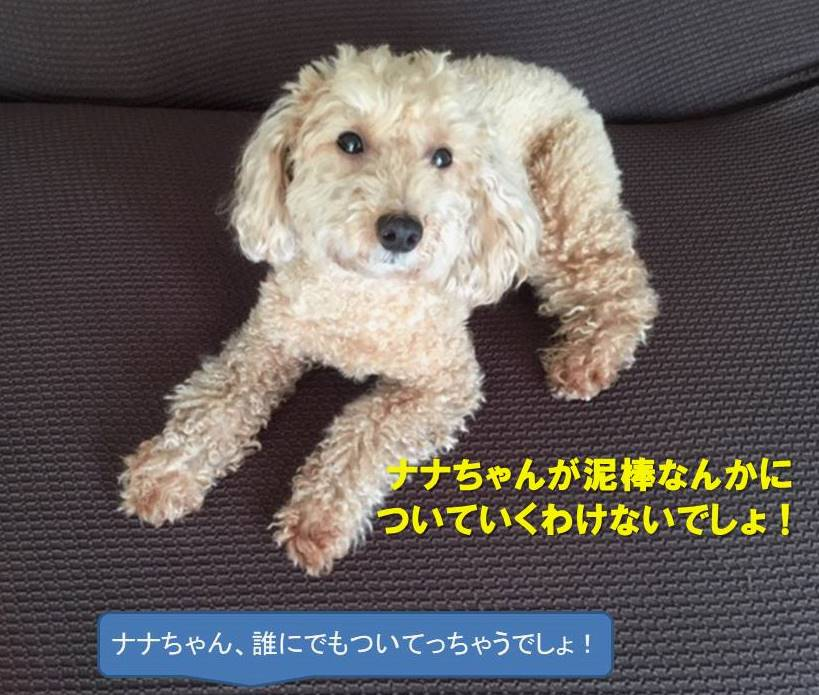 f:id:nanachan59:20190728212758j:plain