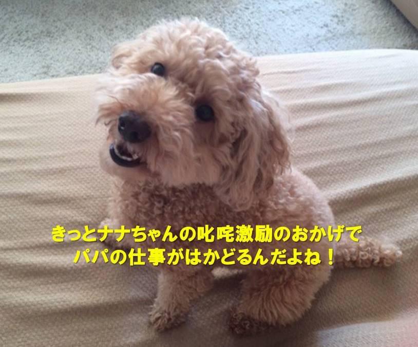 f:id:nanachan59:20190809152754j:plain