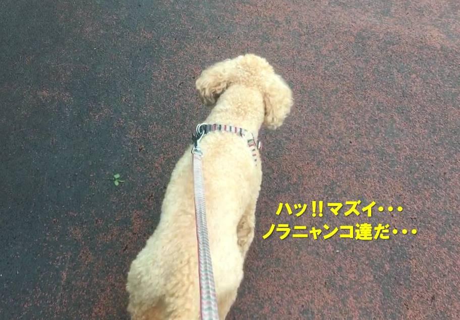 f:id:nanachan59:20190818151351j:plain