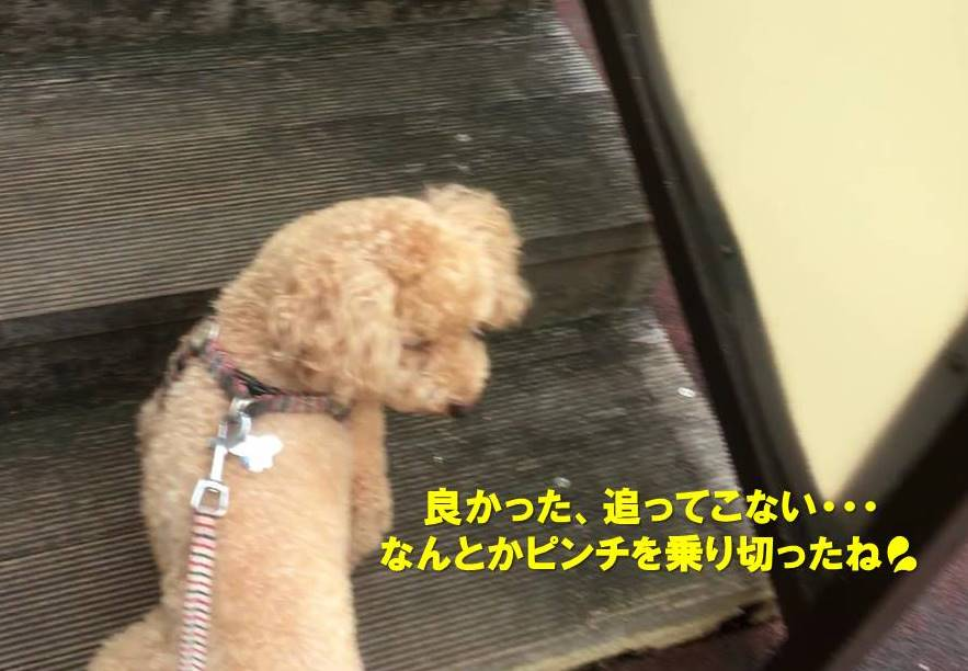 f:id:nanachan59:20190818152707j:plain