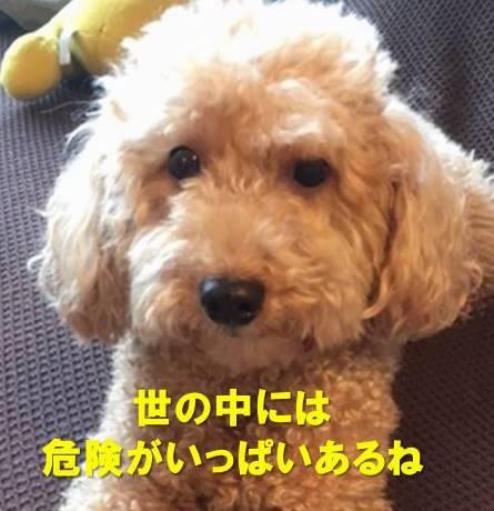 f:id:nanachan59:20190818212914j:plain