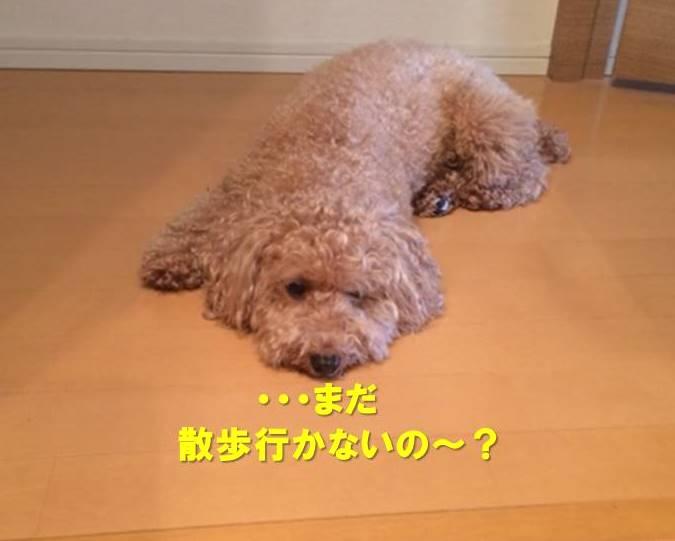 f:id:nanachan59:20190826180043j:plain