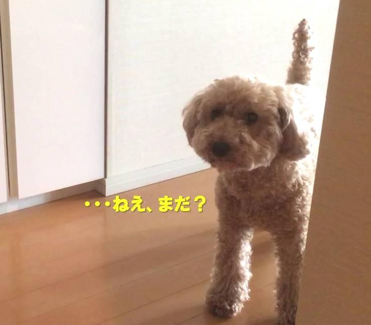 f:id:nanachan59:20190826180426j:plain