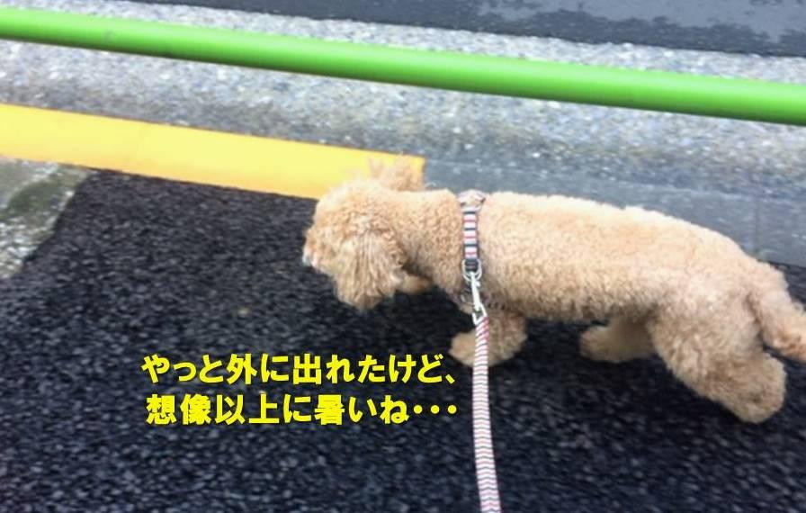 f:id:nanachan59:20190826180934j:plain