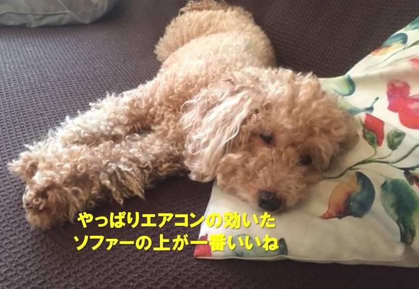 f:id:nanachan59:20190826181517j:plain