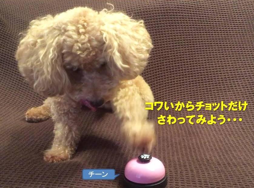 f:id:nanachan59:20190915164828j:plain