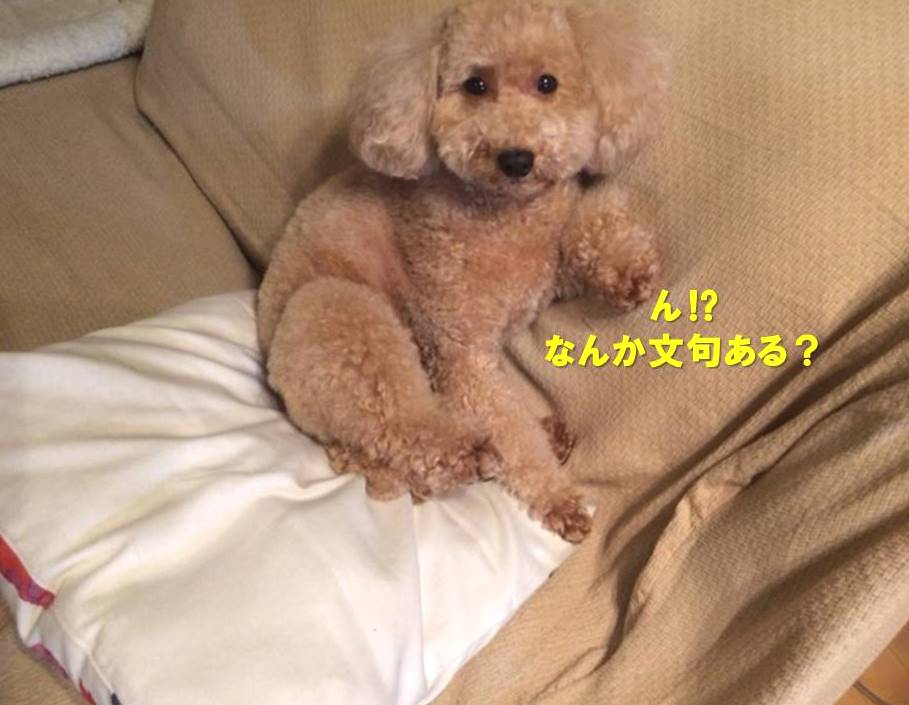 f:id:nanachan59:20190926162744j:plain