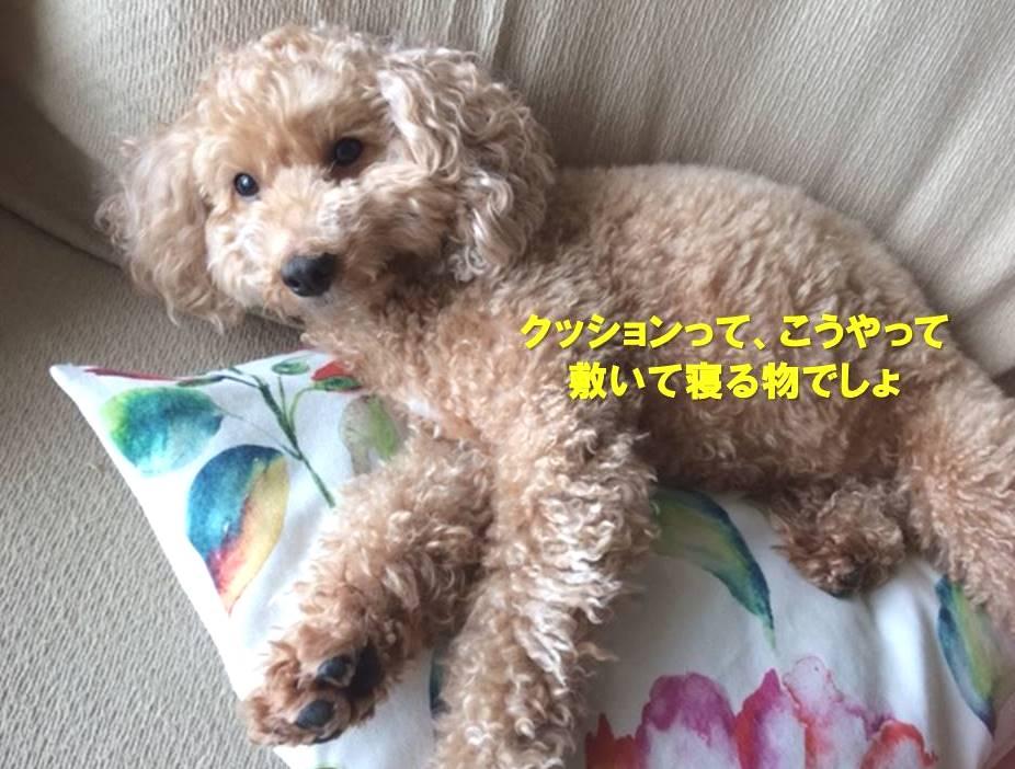 f:id:nanachan59:20190926163223j:plain