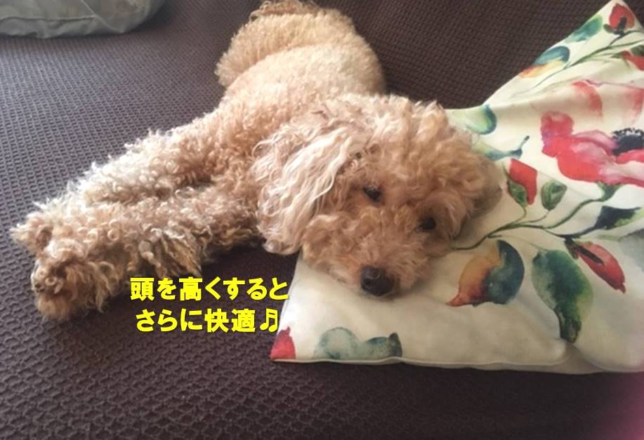 f:id:nanachan59:20190926164051j:plain
