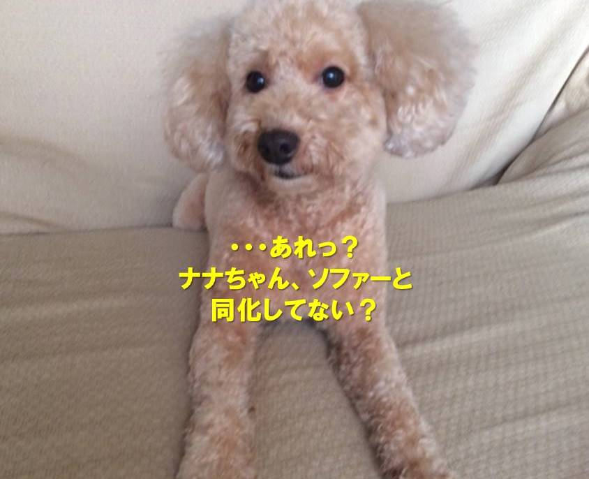 f:id:nanachan59:20191002170725j:plain