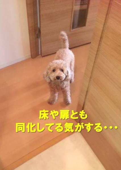 f:id:nanachan59:20191002171225j:plain