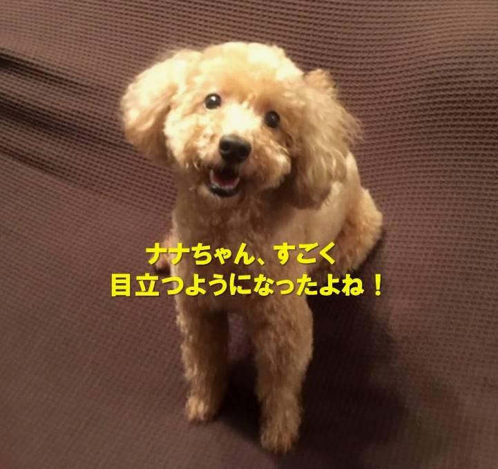 f:id:nanachan59:20191002183451j:plain