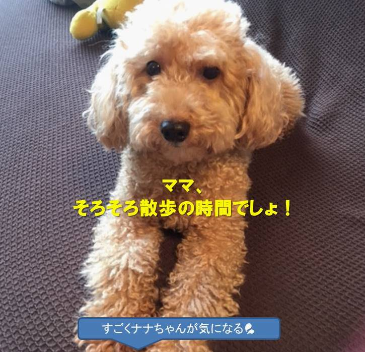 f:id:nanachan59:20191002184405j:plain