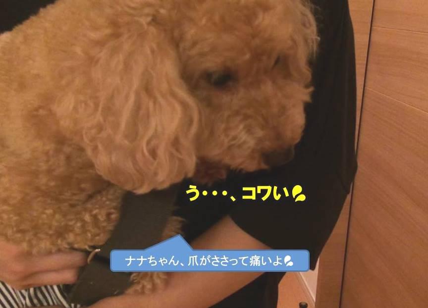 f:id:nanachan59:20191006113634j:plain