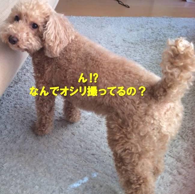 f:id:nanachan59:20191009160558j:plain