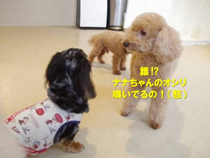 f:id:nanachan59:20191009161303j:plain
