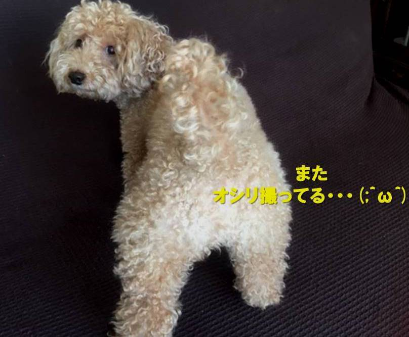 f:id:nanachan59:20191010170025j:plain