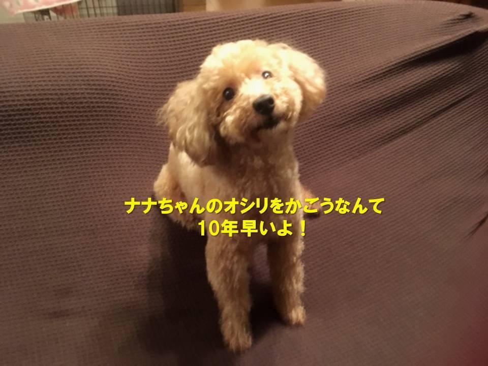 f:id:nanachan59:20191012224915j:plain