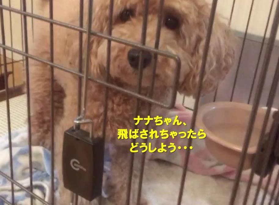 f:id:nanachan59:20191017170624j:plain