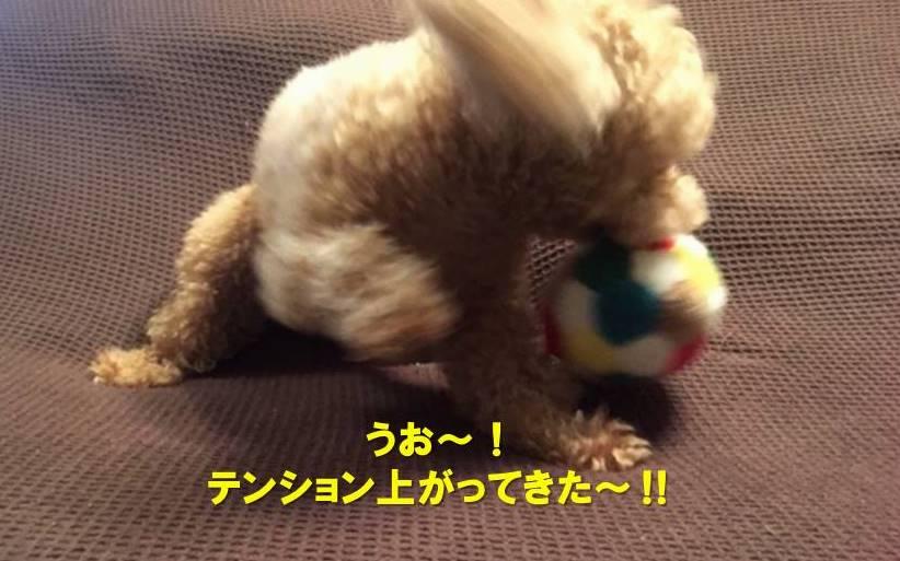 f:id:nanachan59:20191022190416j:plain
