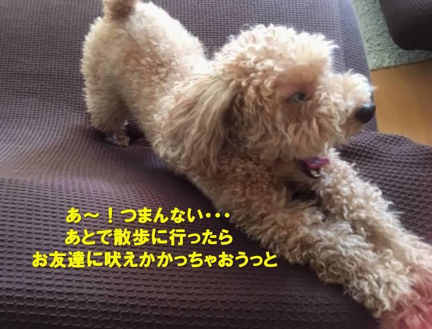 f:id:nanachan59:20191028155723j:plain