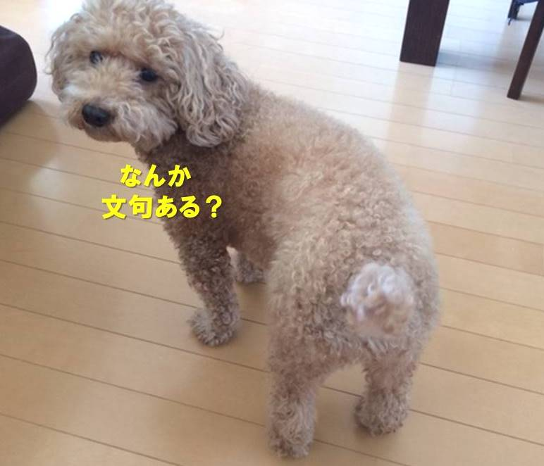 f:id:nanachan59:20191028222330j:plain