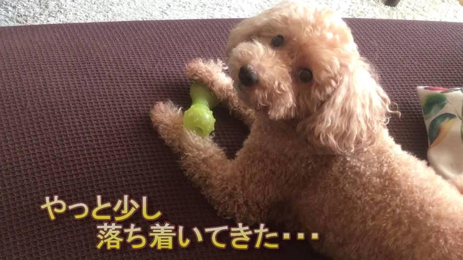 f:id:nanachan59:20191105162656j:plain