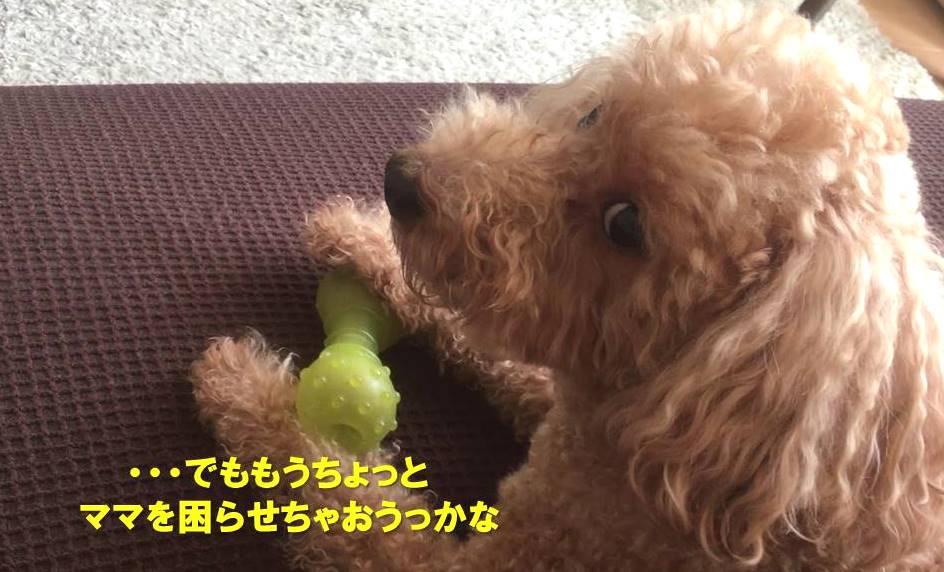 f:id:nanachan59:20191105163013j:plain