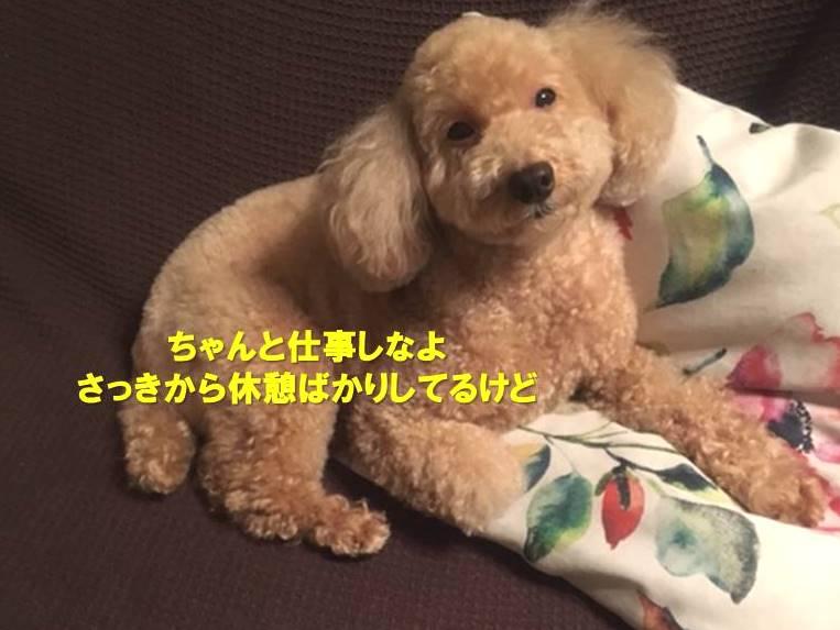 f:id:nanachan59:20191109175723j:plain