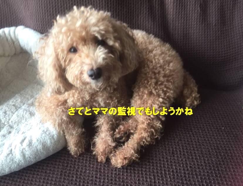 f:id:nanachan59:20191109180723j:plain