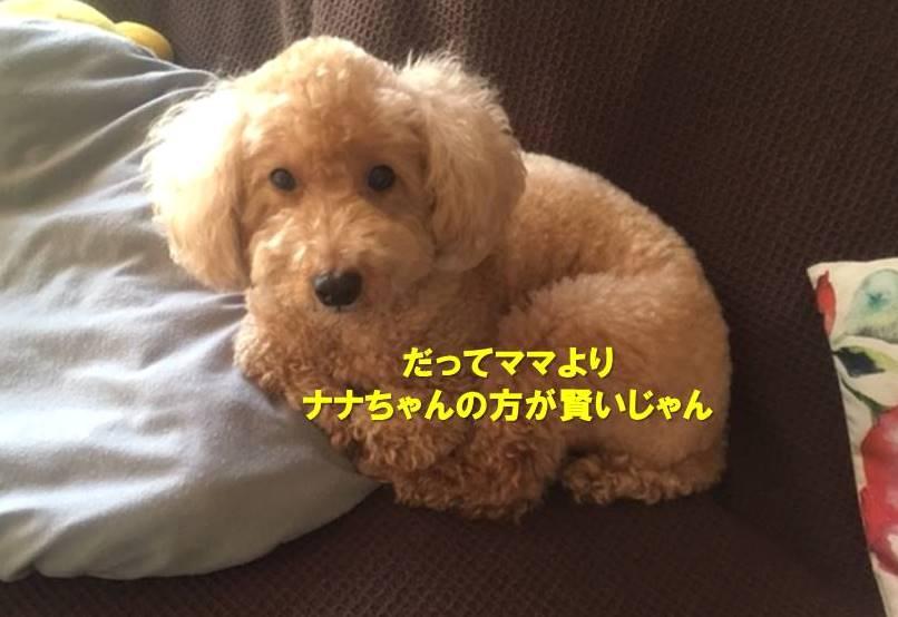 f:id:nanachan59:20191109181843j:plain