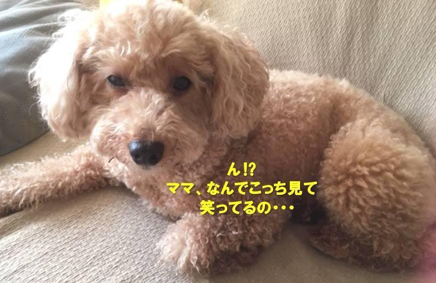 f:id:nanachan59:20191119161902j:plain