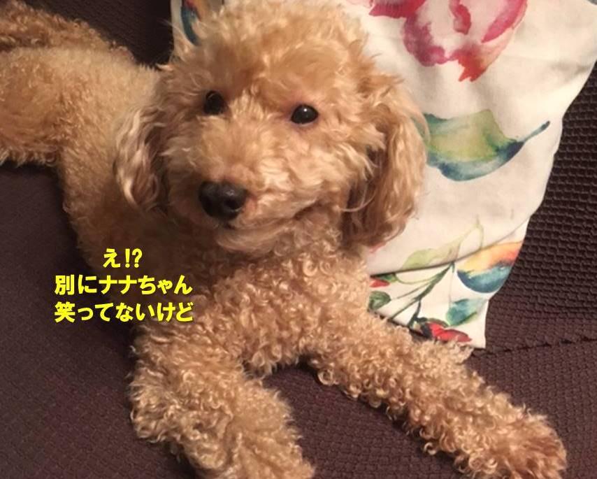 f:id:nanachan59:20191119162541j:plain