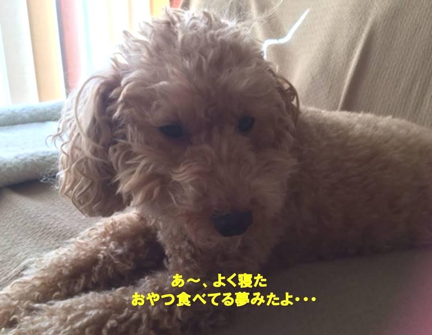 f:id:nanachan59:20191119163324j:plain