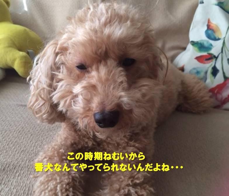 f:id:nanachan59:20191119231828j:plain