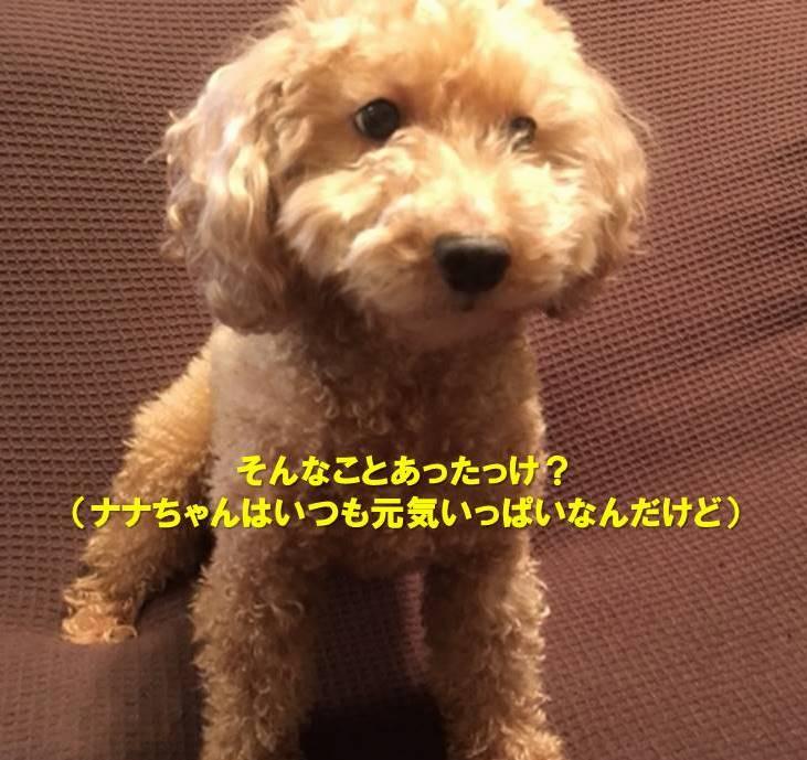 f:id:nanachan59:20191209151244j:plain