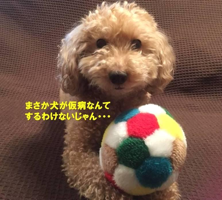 f:id:nanachan59:20191209153604j:plain