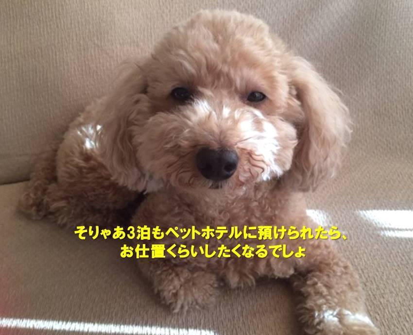 f:id:nanachan59:20191209154500j:plain