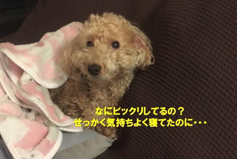 f:id:nanachan59:20191213171518j:plain