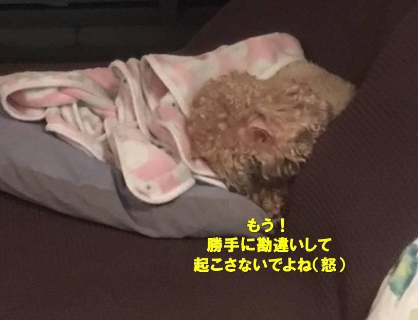 f:id:nanachan59:20191213171928j:plain