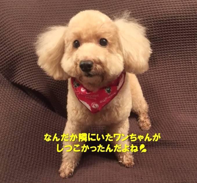 f:id:nanachan59:20191221133350j:plain