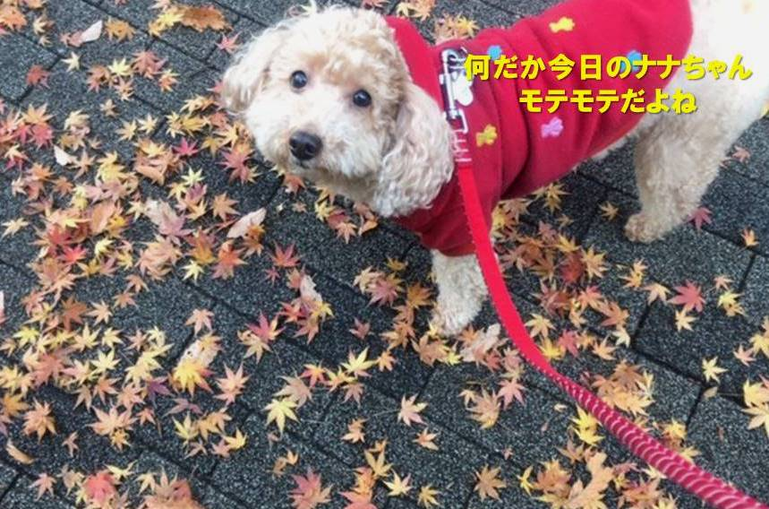 f:id:nanachan59:20191225141733j:plain