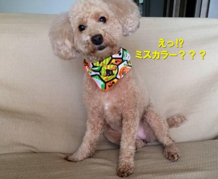 f:id:nanachan59:20200110162122j:plain
