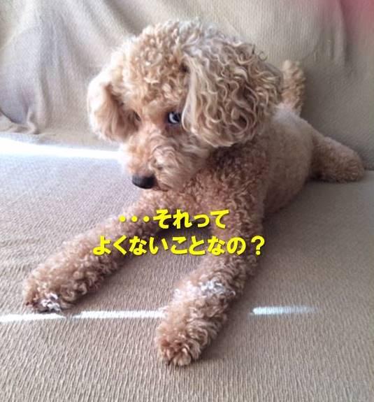 f:id:nanachan59:20200110162545j:plain