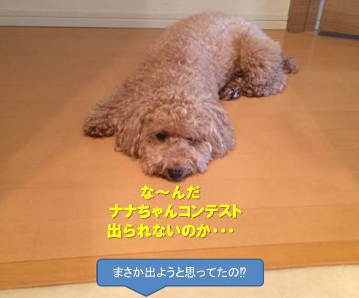 f:id:nanachan59:20200110163924j:plain